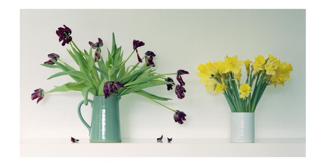 tulips-and-daffs